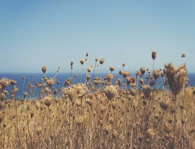 Field and the Sea